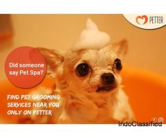 Pet Store in Pune , Pet Grooming, Dog Walking