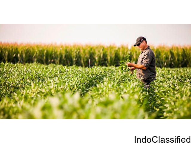 Thailand Crop Protection Market Research Report