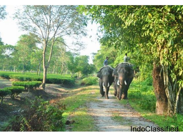 Wildlife Trip at Gorumara