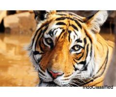 Jeep Safari Ranthambore | Online Ranthambore Safari Booking