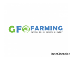 Desi Cow Milk Farm in Gurgaon | GFO Farming