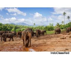 Sri Lanka Serenity Tour Travel Packages from India