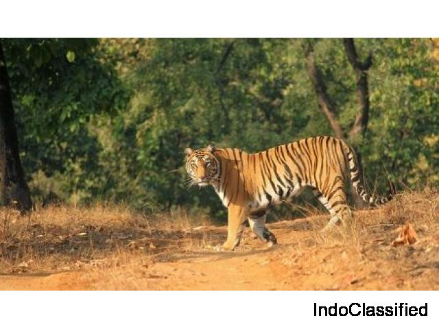 Enjoy the Wildlife in Satpura Tiger Reserve by Forsyth Lodge