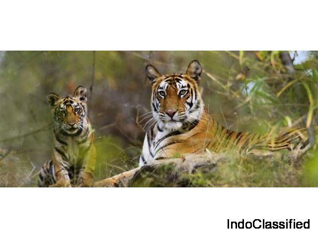 Explore the amazing wilderness at Jim Corbett National Park.