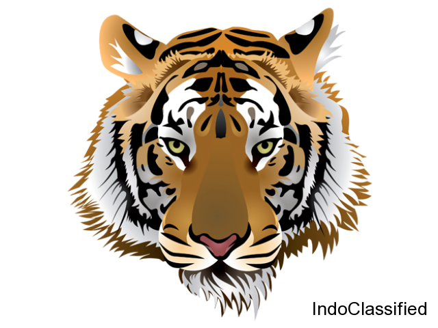Ranthambore safari booking