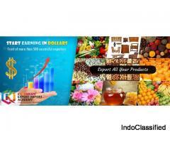 Import Export Institute