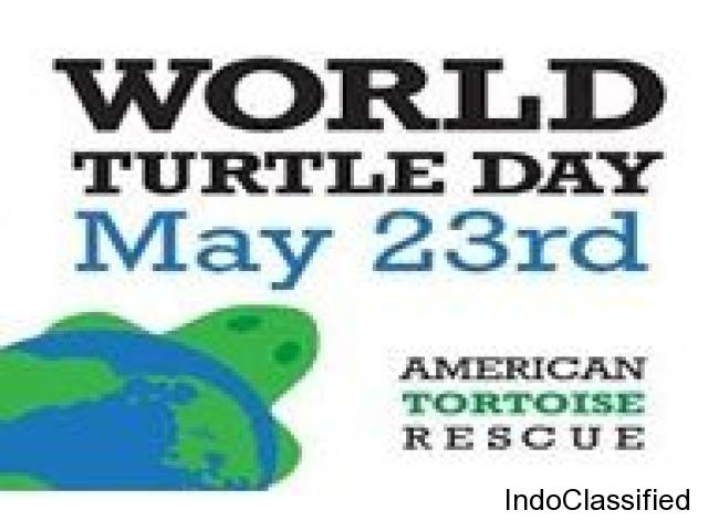 Rescue Tortoises