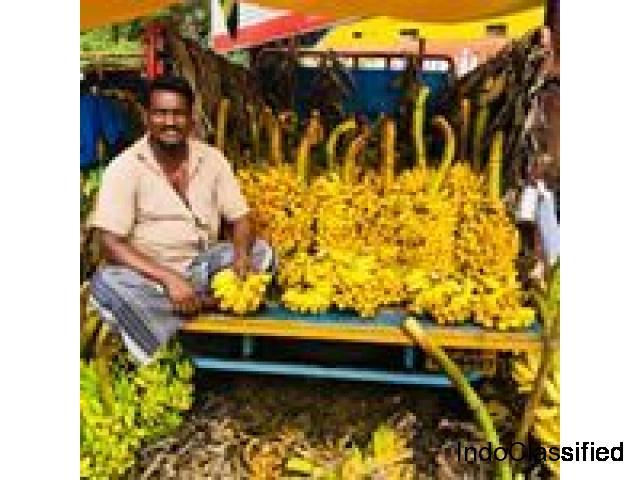 Forfait Tour | Réserver des forfaits vacances au Kerala