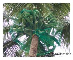 Coconut Tree Net in Mangalore