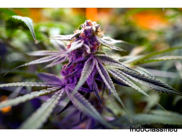 Buy Marijuana strains