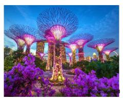 Singapore Tour packages by STARDMC