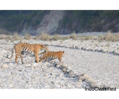 Jim Corbett National Park Online Booking