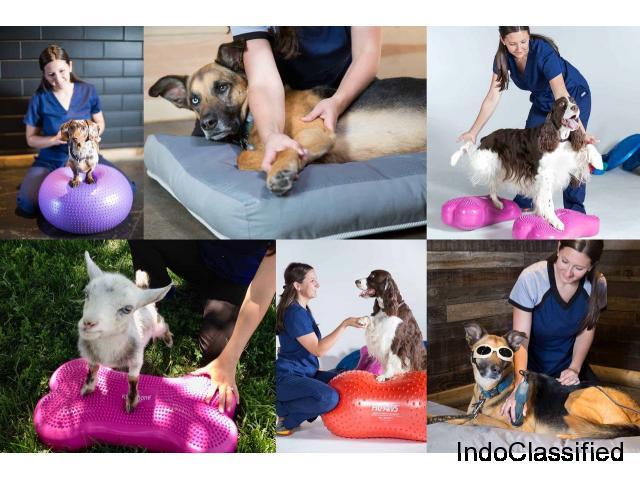 WalkingPawsRehab - Pet Rehabilitation