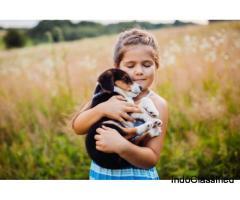 Pet Care Medications Online | Dog Care Medicine Online | Fidomate