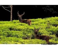 Ooty Heritage tours and travels - Honeymoon Packages