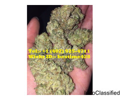 Legit Source to Order Top Shelf Medical Marijuana Strains, Concetrates, Edibles & CBD Oil.