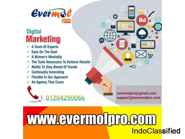 Website Designing in Noida