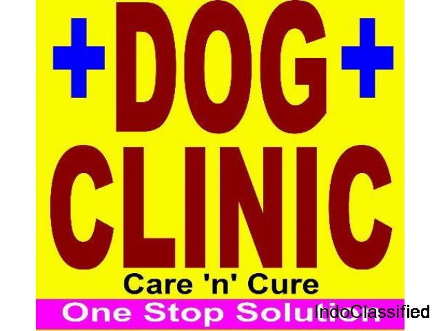 Dog Clinic In Pratap Nagar Jaipur