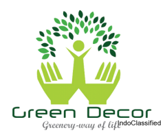 Buy New Year Gifts for Plant Lovers Online at Green Decor