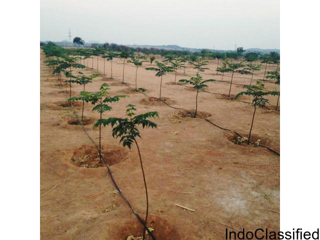 Greenacres urban farm land