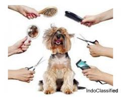 Pet Clinic & 24 veterinary Clinic in Chhatarpur, Delhi