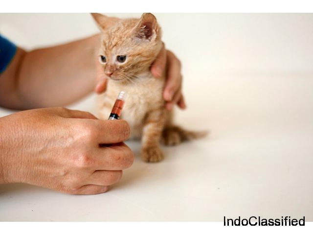 Affordable Pet Vaccination Service in Chhatarpur, Delhi