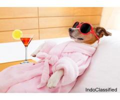 Amazing Pet Spa Service in Chhatarpur, Delhi