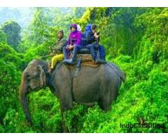 Enjoy with your kids at Wildlife Tour packages