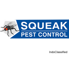 Affordable Squeak Pest Control Brisbane