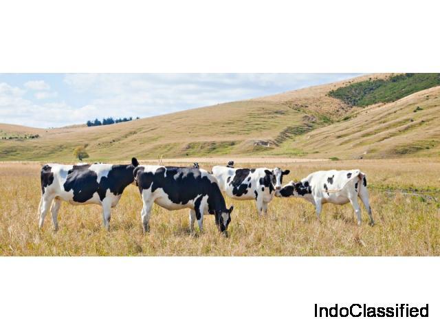 Leading Australia's Livestock Exporters in Japan