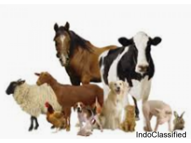 Animal healthcare products Manufacturers in India