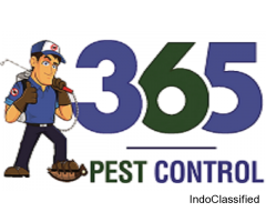 Pest Control In Port Melbourne