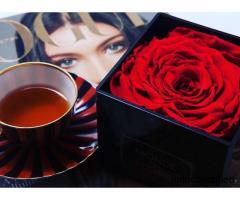 Konservierte Rosen - Kaufen Sie das schönste Geschenk