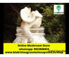 Mushroom  Farming in Ahmadnagar