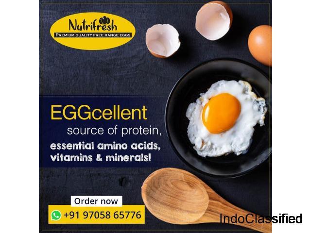 Nutrifresh Eggs - Organic and Free range Chicken Farm in Hyderabad