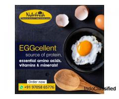 Nutrifresh Eggs - Organic and Free range Chicken Farm in Hyderabad