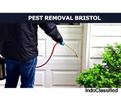 Creating a pest-free environment