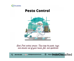 Best Pest Control service in Jaipur at a low price
