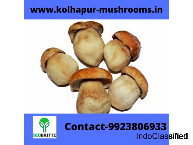 Mushroom spawn culture in Ballari