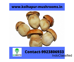 Mushroom spawn culture in Ballari