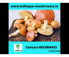Mushroom spawn center in Harpanahalli