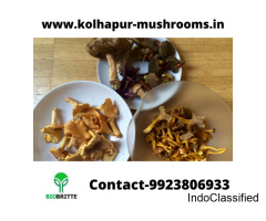 Mushroom spawn dealer in Hoovina Hadagali