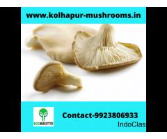Mushroom spawn lab in Kudligi