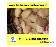 Mushroom cultivation contract farming in Siraguppa