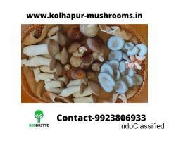 Contract mushroom farming in Athani