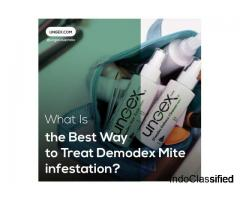 What Is the Best Way to Treat Demodex Mite Infestation?