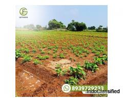Visit India's best Agri land marketplace and get your own farm today.