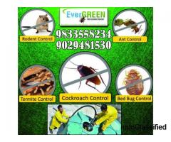 Pest control in Kalyan | Pest control services in Dombivli