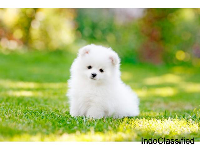 Buy Pet Supplies Online at Best Prices in India - Mr N Mrs Pet