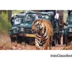 Tiger tours in India